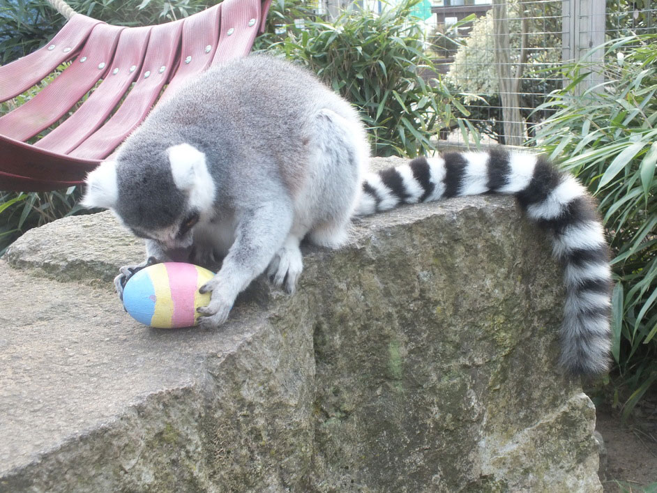 Battersea_Park_Children's_Zoo_Easter_Egg_Hunt